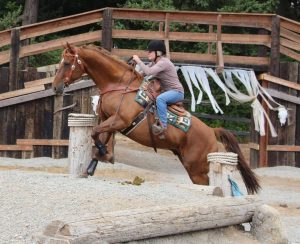 Riding Opie over an obstacle