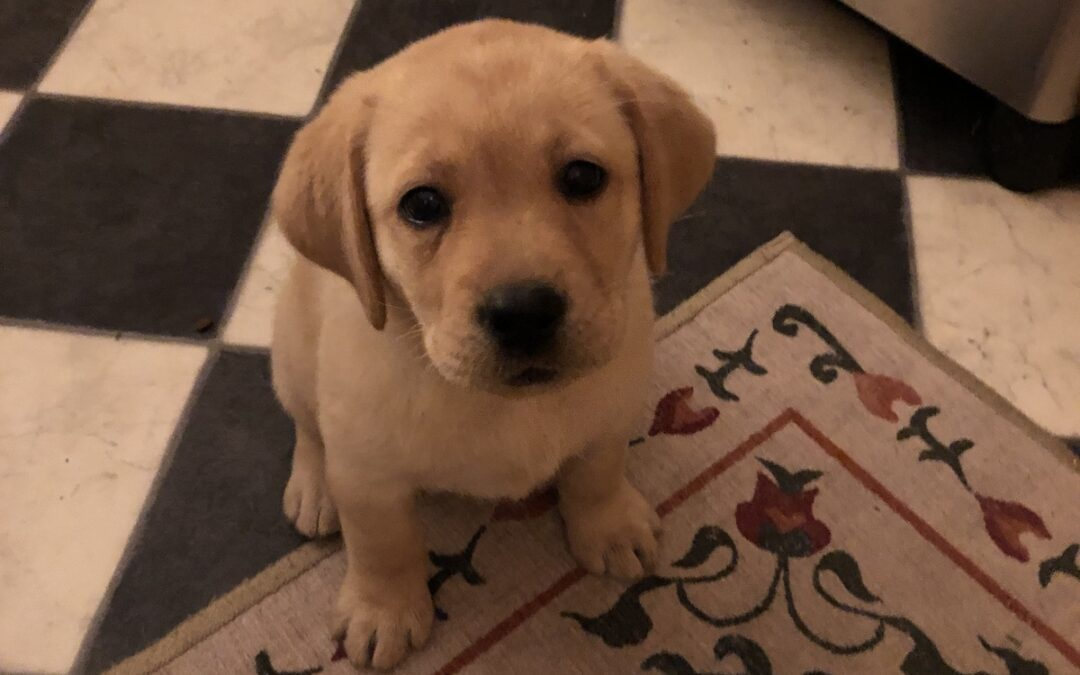 How to Wreck Your Email Copywriting and Turn People Off…Starring Our New Puppy
