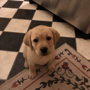 washable rugs a puppy and email copywriting mistakes